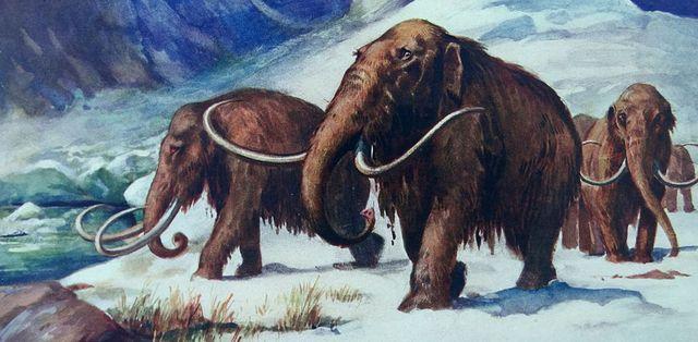 representación de varios mamuts lanudos