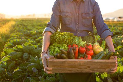 man holding crate ob fresh vegetables