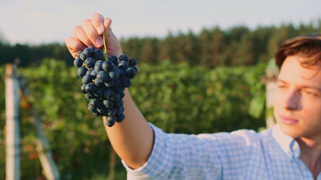 man holding grapes in vineyard