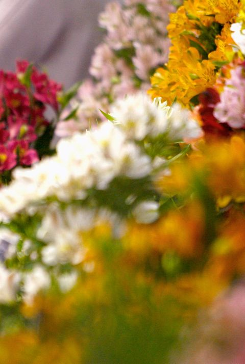 Gardening Scotland Show Opens Its Door To The Public