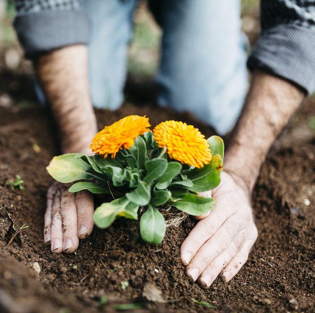 Man planting flowers in his garden