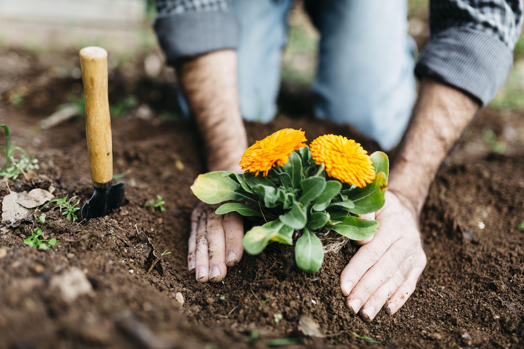 National Trust Gardening Gift    Hand Fork and Gloves