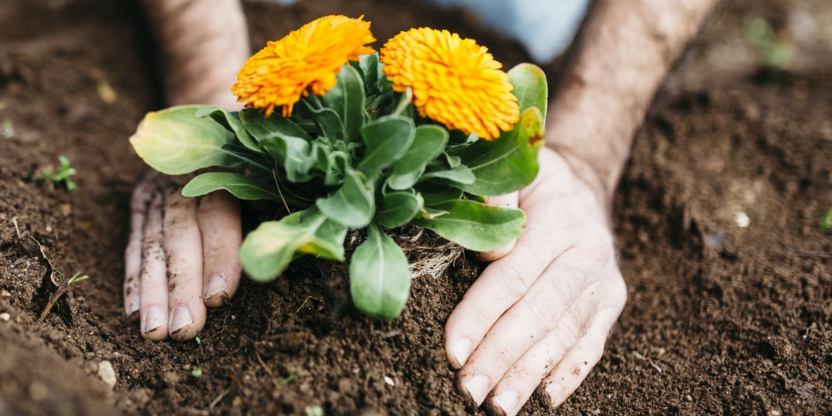 No dig gardening is the big eco gardening trend of 2020 – here's how to get started