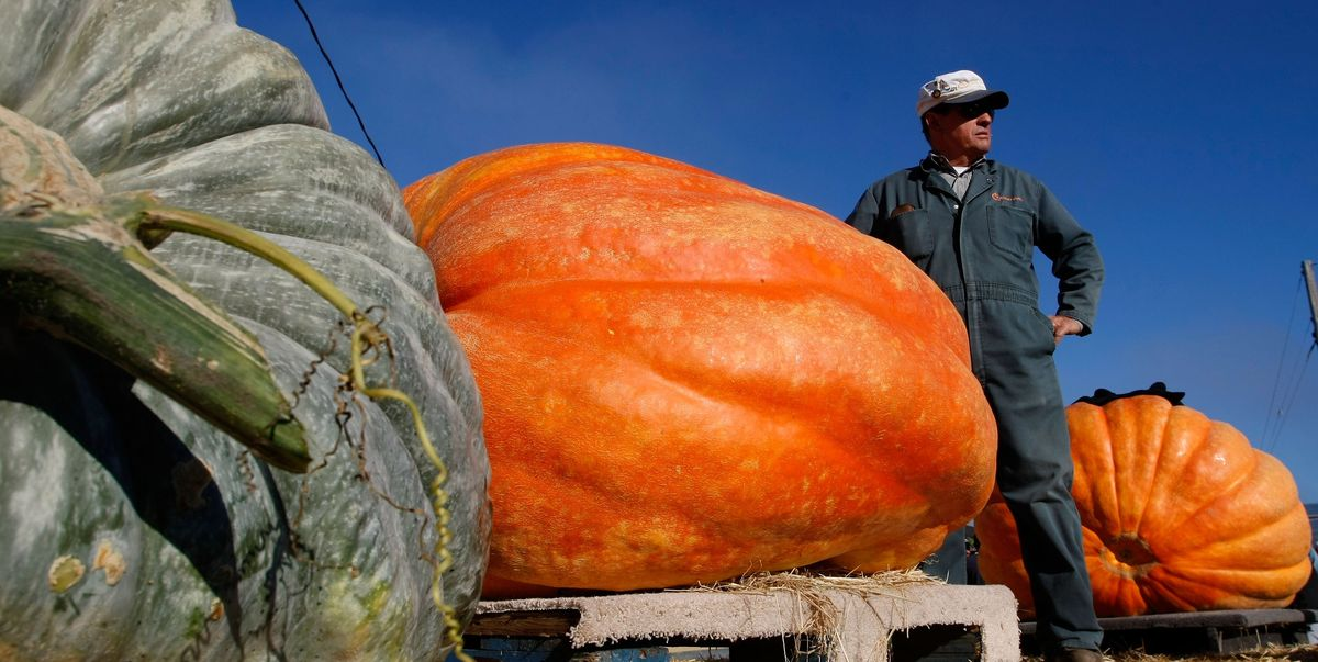 Best Jeep Wrangler >> How to Grow a Giant Pumpkin