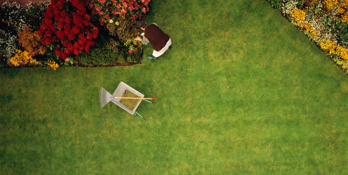 The Best Types of Grass for Growing a Luscious Lawn