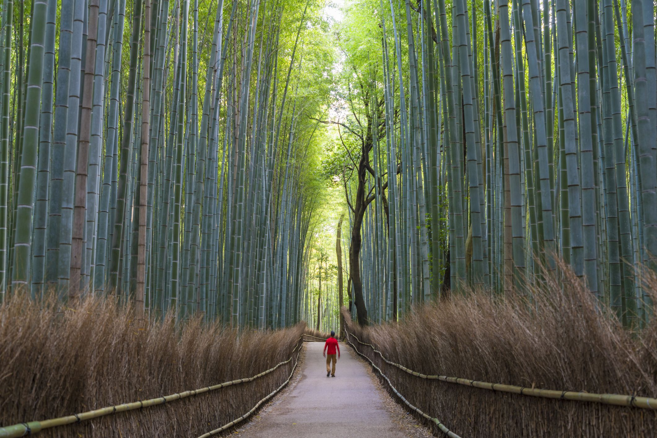 Man walking down a path in Japanese bamboo forest