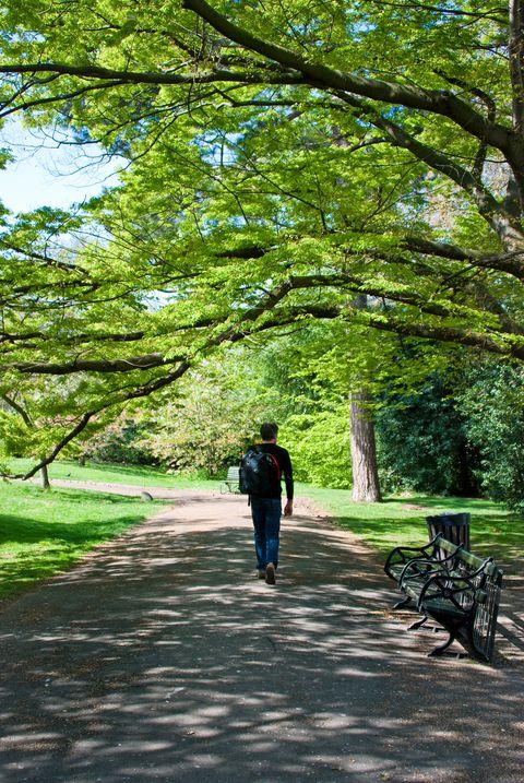 man walking in beautiful park gardens
