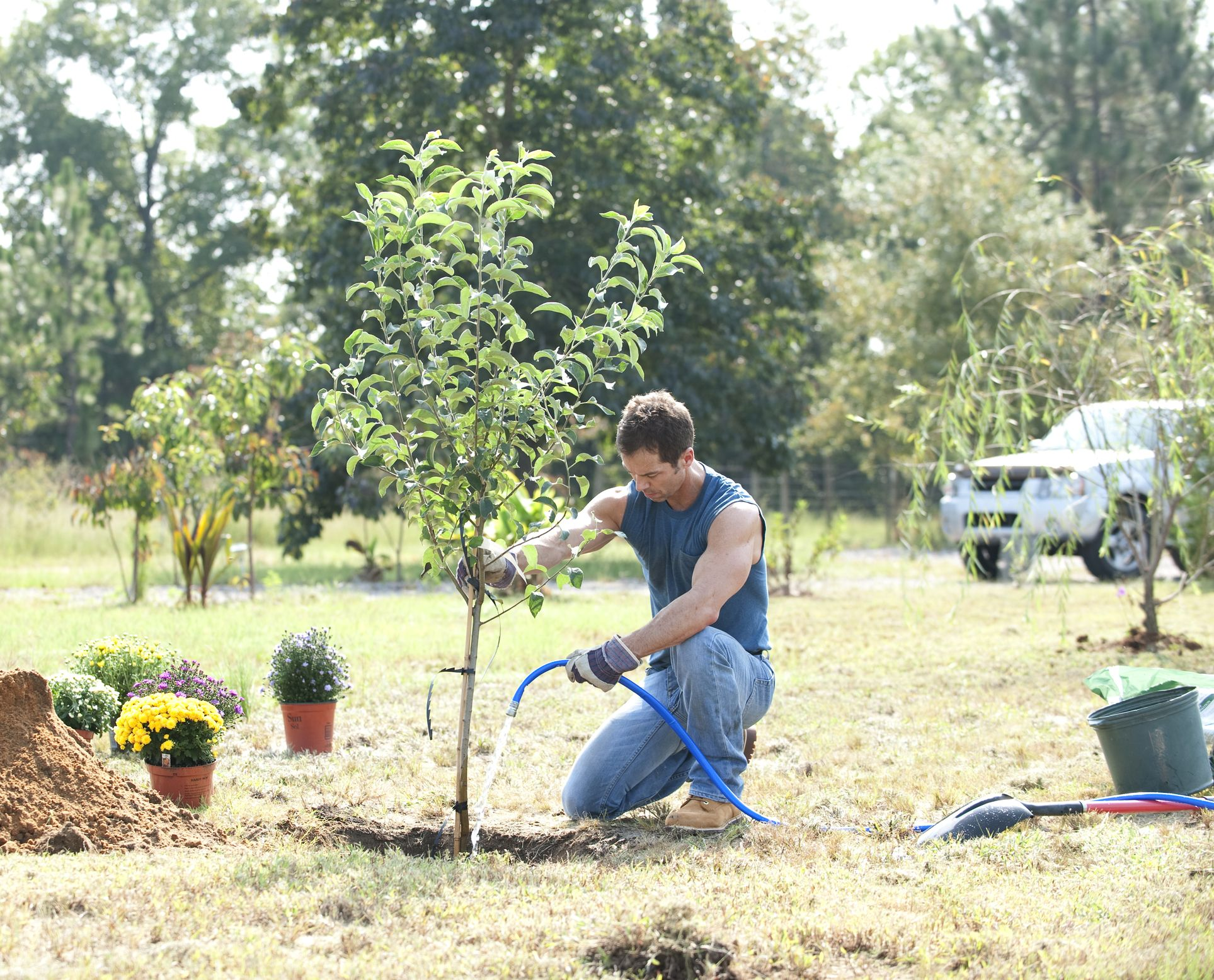 How and When To Plant a Tree