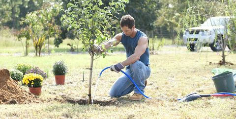 Image result for plant a tree for dead baby