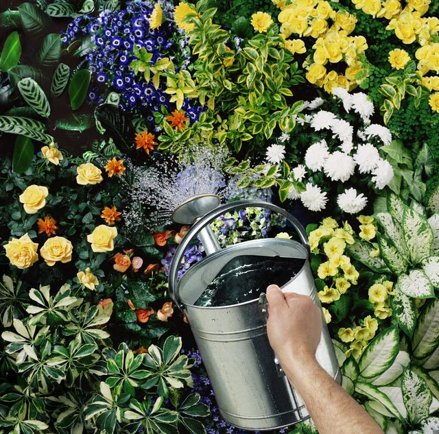 man watering flowers, close up of hand and watering can