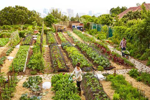Managing their urban garden