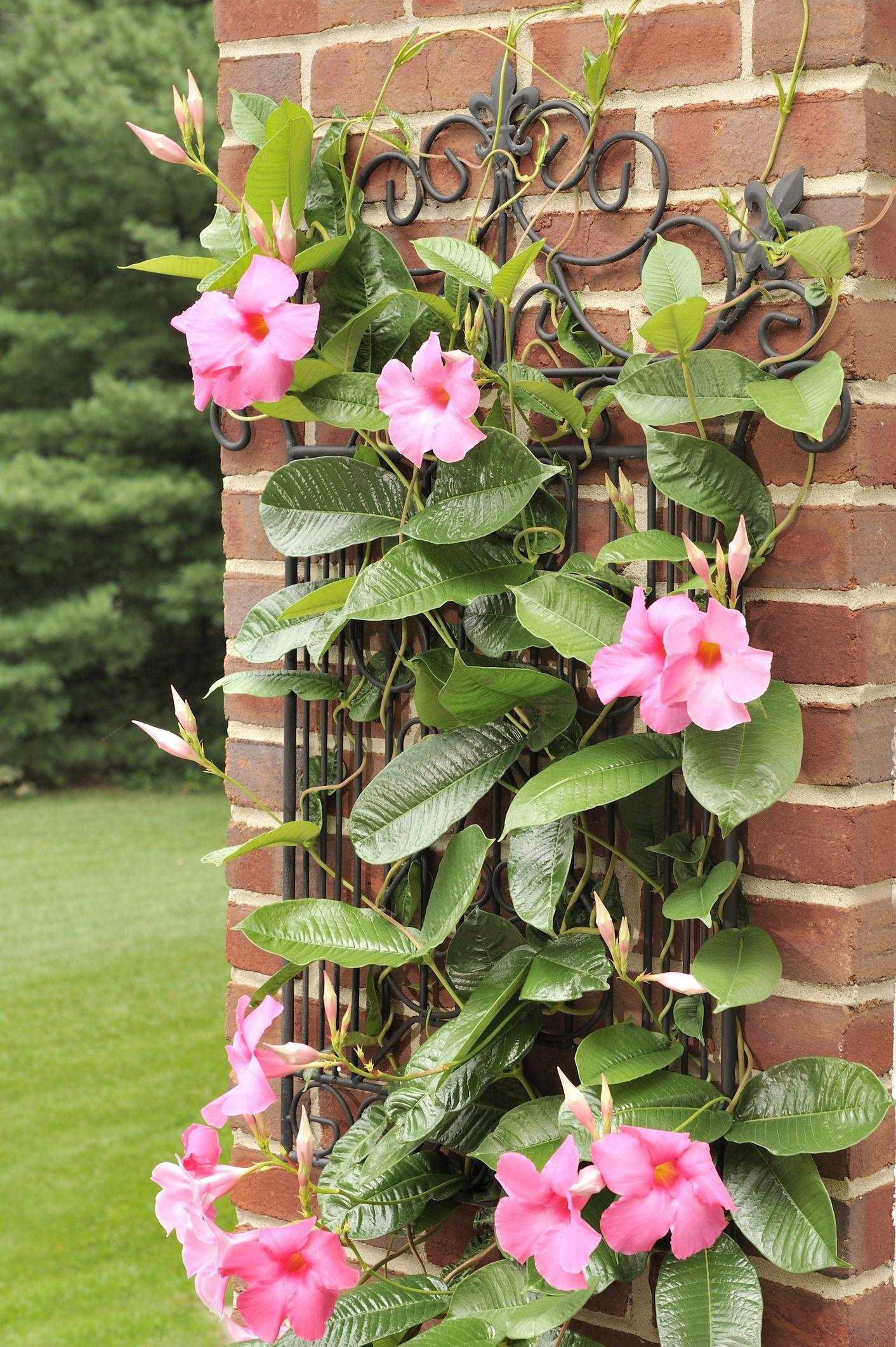 15 Best Patio Plants Outdoor Patio Plants Ideas