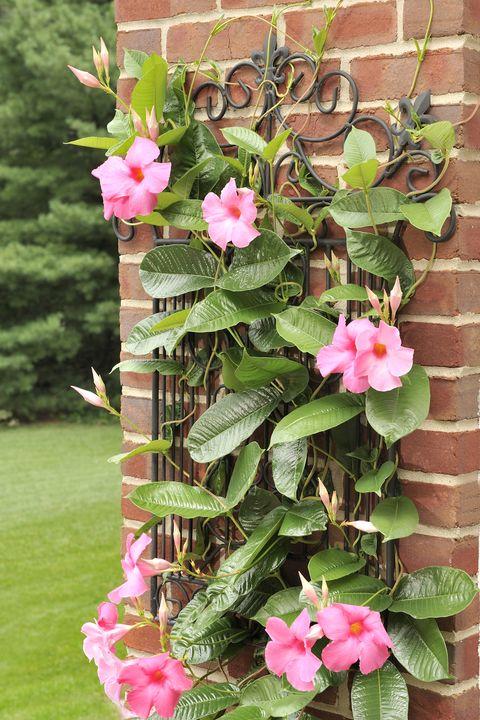 15 Best Patio Plants Outdoor, Outdoor Patio Plants