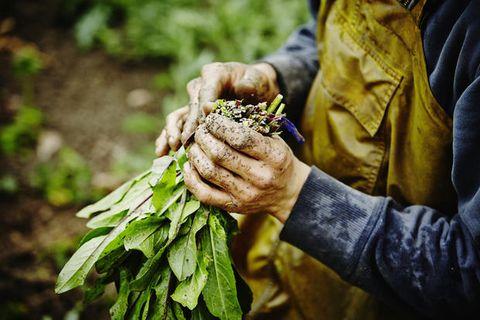 Hand, Botany, Adaptation, Cash crop, Plant, Soil, Photography, Flower, Plant pathology, Tobacco,