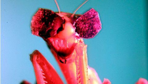 Pink, Red, Lip, Flower, Plant, Close-up, Magenta, Macro photography, Petal,