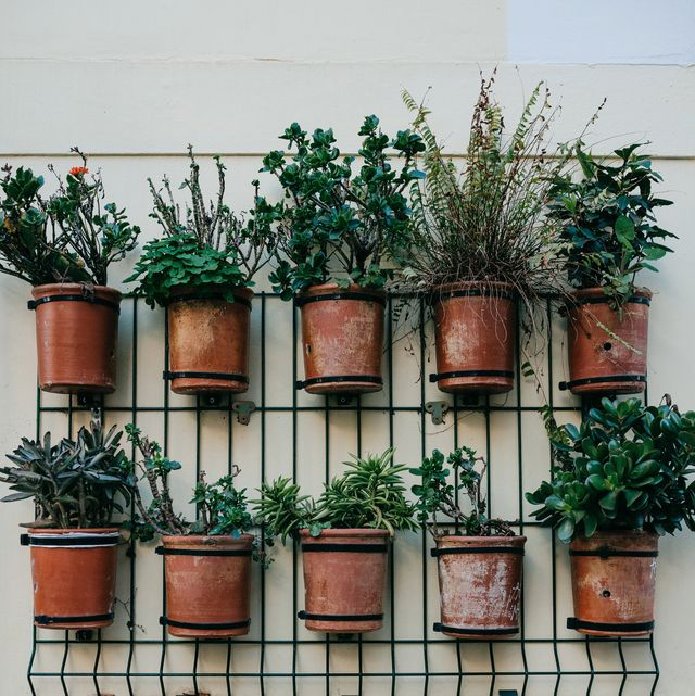 many pots with plants on the outside wall of the house for decoration