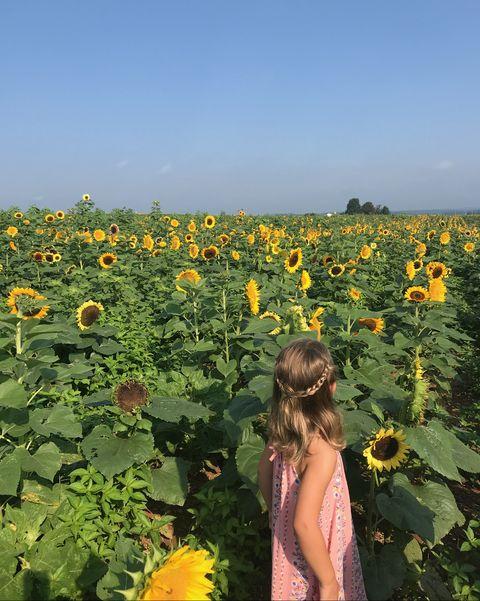 little girl in pink dress in a field of sunflowers