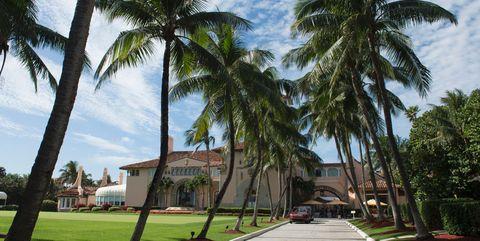 Tree, Palm tree, Arecales, Property, Daytime, Sky, Woody plant, Plant, Attalea speciosa, Tropics,