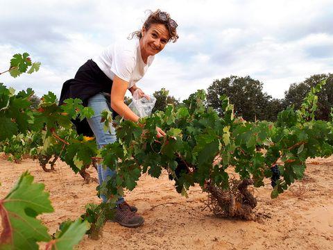 La enóloga María José García muestreando el viñedo