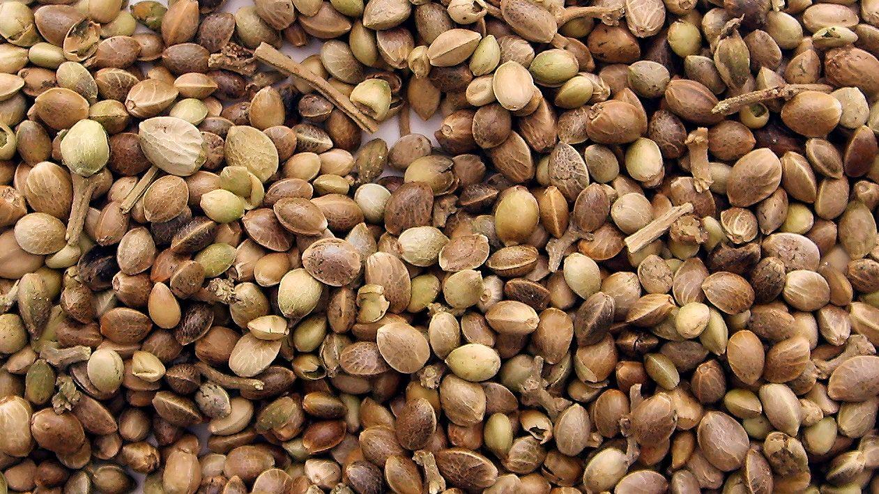 How do I pick marijuana seeds