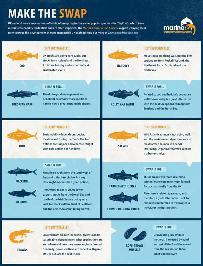 The Marine Conservation Society release Good Fish Guide to promote sustainable fishing and shopping habits