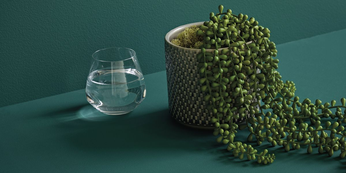 Marks Amp Spencer Plants String Of Pearls Plant Will Help You Achieve Shelfie Goals