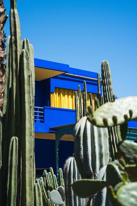 Blue, Cactus, Majorelle blue, Saguaro, San Pedro cactus, Architecture, Sky, Botany, Flower, Plant,