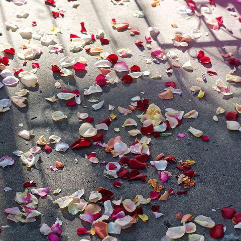 Wedding Rose Petal Confetti