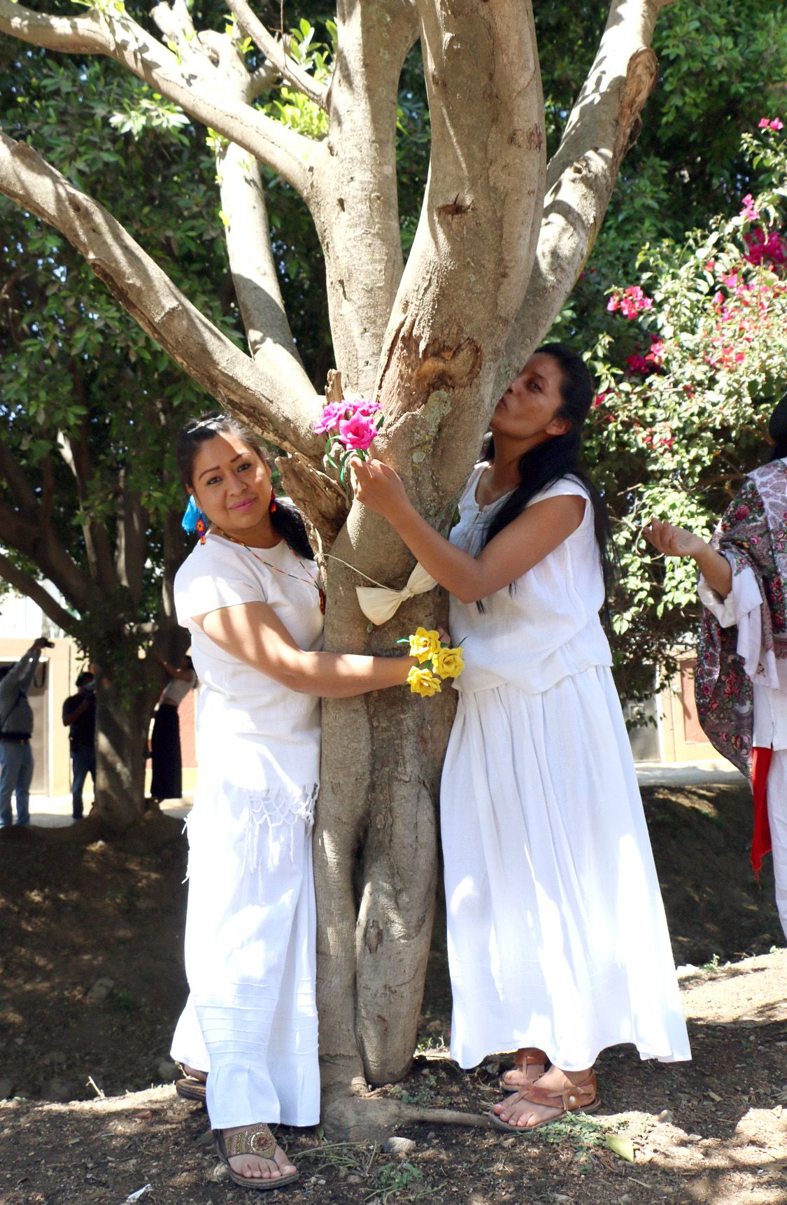 Women are Marrying Trees and the Reason Will Surprise You