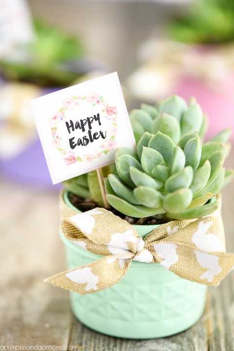 mason jar succulent easter party gift