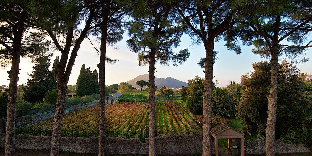 Mastroberardino di Atripalda fa il vino come duemila anni fa