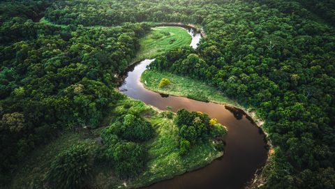 mata atlantica   atlantic forest in brazil