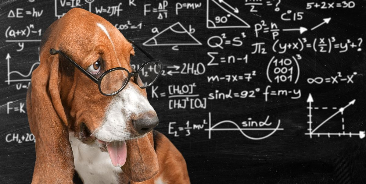 La fórmula para calcular la 'edad humana' de tu perro (y no es x7)