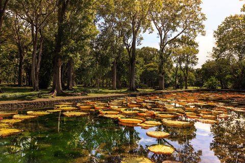 mauritius botanical garden