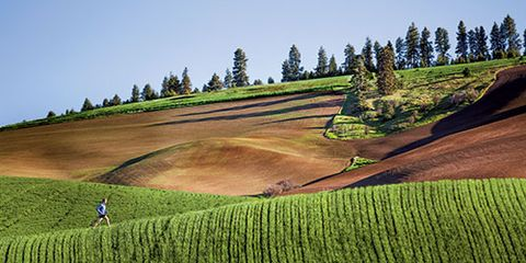 Farm, Agriculture, Field, Plantation, Soil, Plain, Rural area, Grassland, Grass family, Crop,