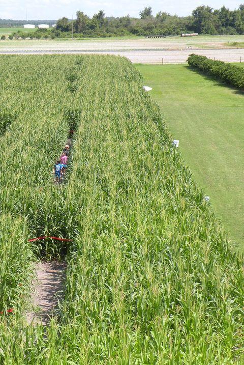 best corn mazes
