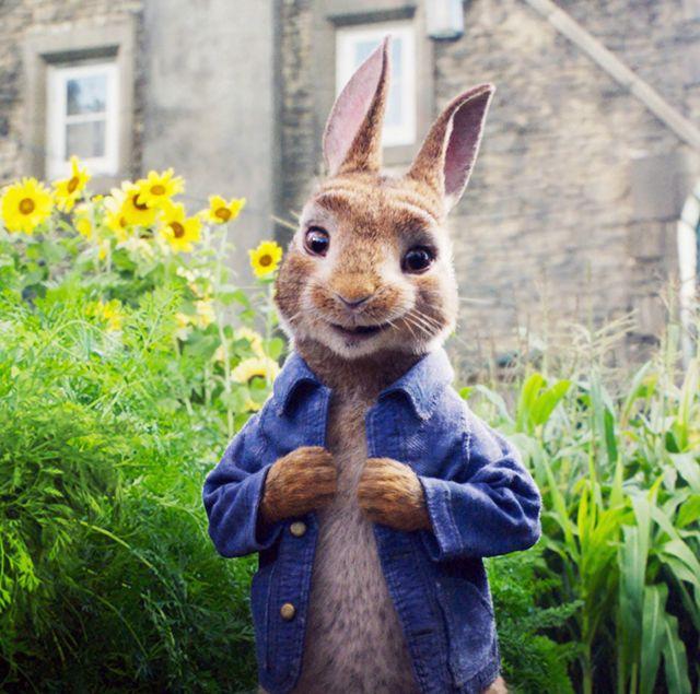 PETER RABBIT, Peter Rabbit (voice: James Corden), 2018. ©Columbia Pictures/courtesy Everett