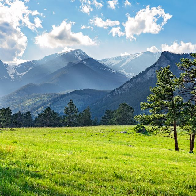 meadow in rocky mountain national park