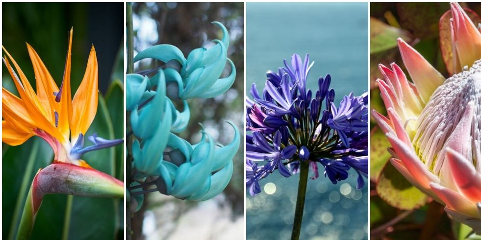 Madeira Gardens Best Plants And Flowers To See Around The