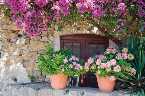 Lidl Selling Mediterranean Flower And Plants Range Lidl Offers
