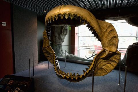 Jaw, Museum, Tourist attraction,