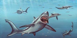 Megalodon prehistoric shark, artwork