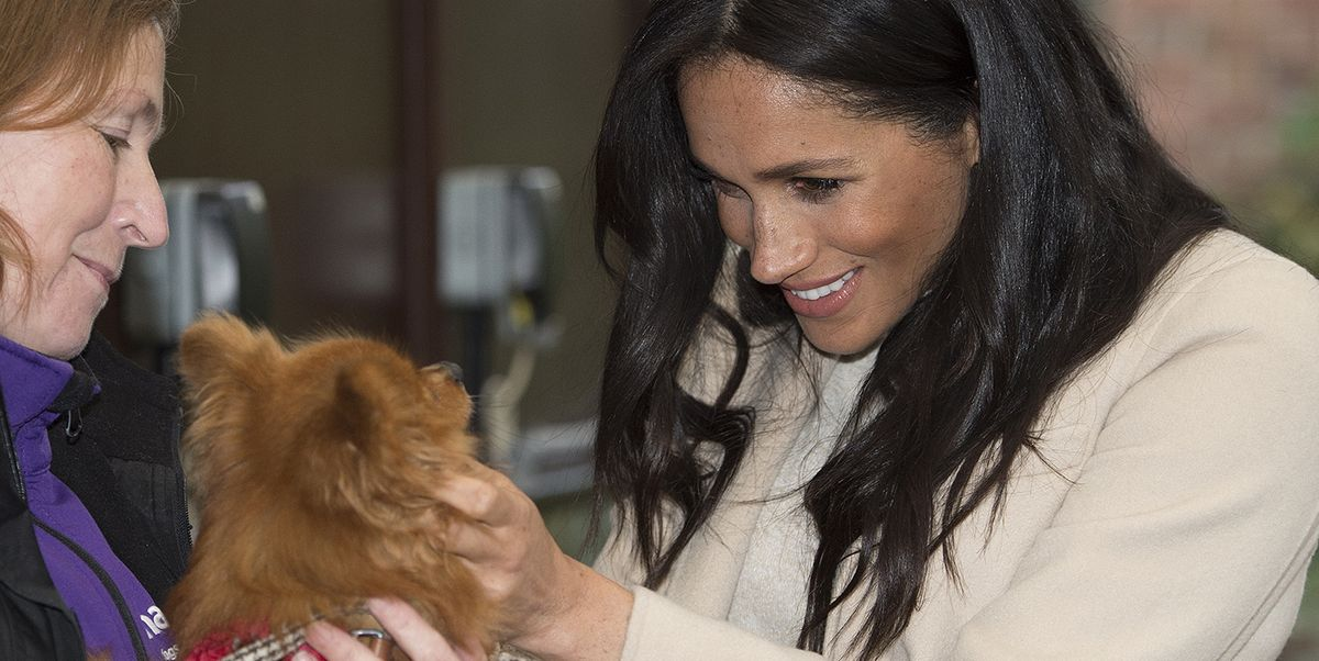 Meghan Markle Sponsors a Dog Kennel in Archie's Name at Mayhew, Her Animal Welfare Patronage