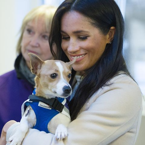 meghan markle mayhew dog foreword annual report rescue