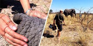 Meghan Markle, Prince Harry, holiday, Africa