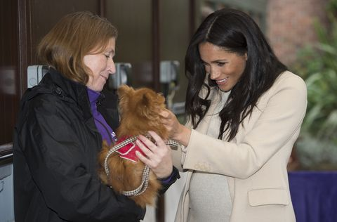 f8ab90cf9c01b Duchess Meghan Falls in Love with Rescue Dogs at First Mayhew Engagement as  Patron. ""