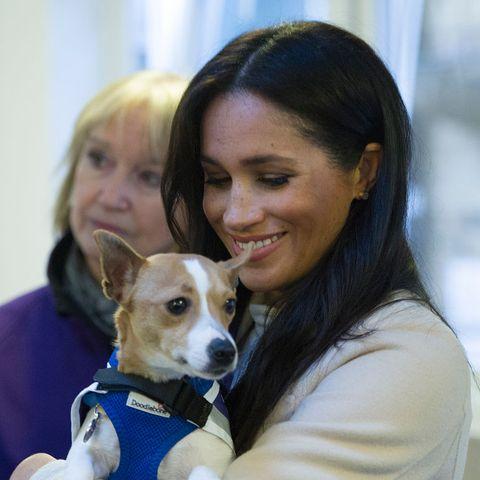 Meghan Markle avec le chien