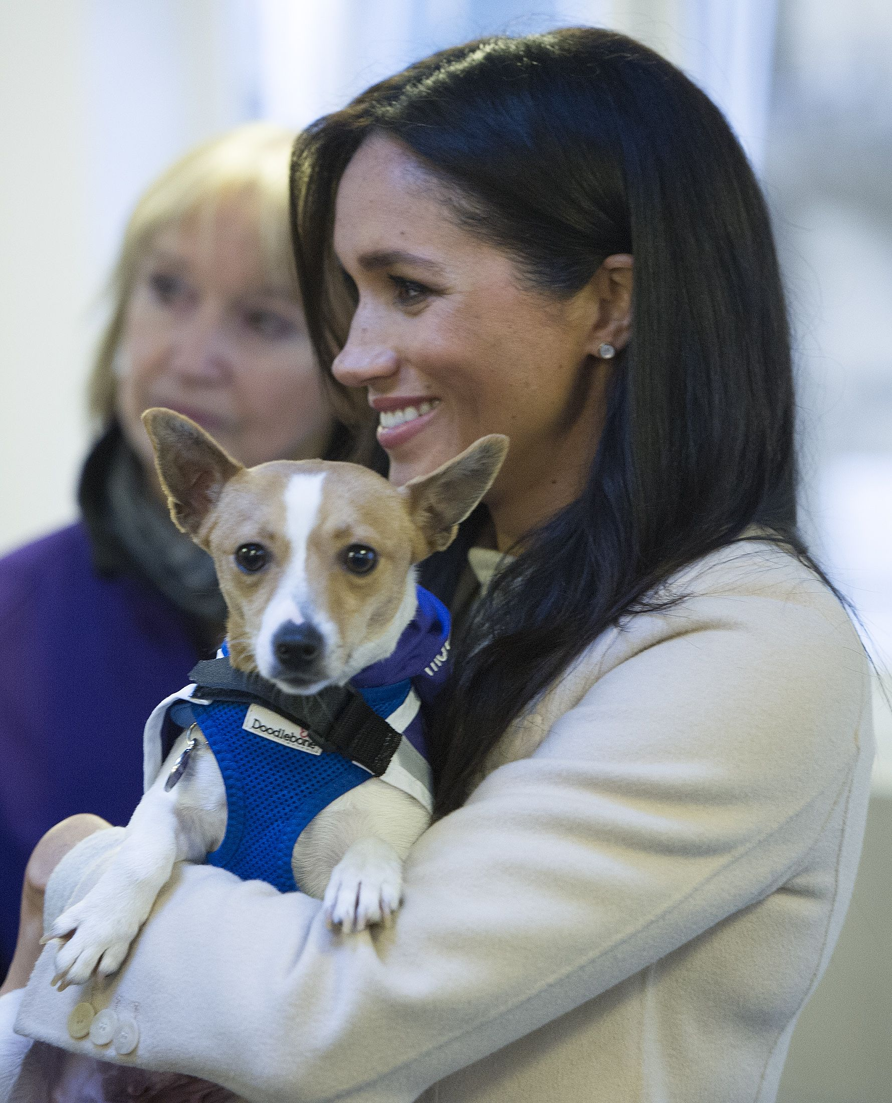 Meghan Markle Quietly Sponsors a Mayhew Dog Kennel In Archie Harrison's Name