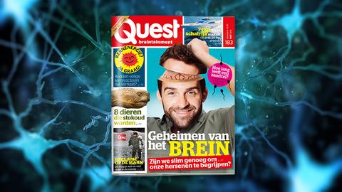 meinummer Quest - geheimen van het brein