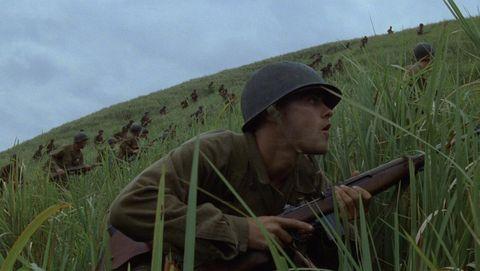 Grass family, Grass, Crop, Prairie, Adaptation, Plant, Soldier, Grassland,